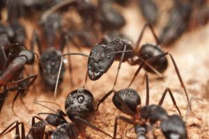 Pest Control - Ant control san antonio