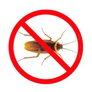 Pest Control San An tonic - Roaches