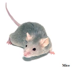 san antonio rodent control