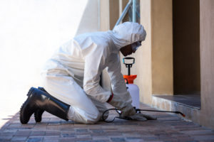 san antonio termite inspection